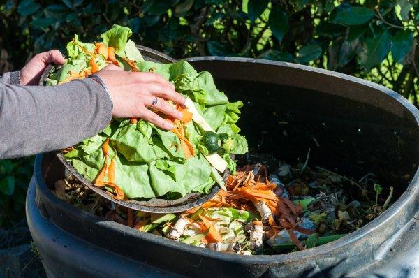 Deputados aprovam projeto que reduz desperdício de alimentos por mercados e restaurantes 2