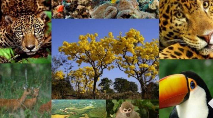 Câmara aprova Protocolo de Nagoia sobre recursos da biodiversidade