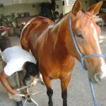 Projeto de Milton Vieira regulamenta profissão de Ferrador ou Ferrageador de Equinos