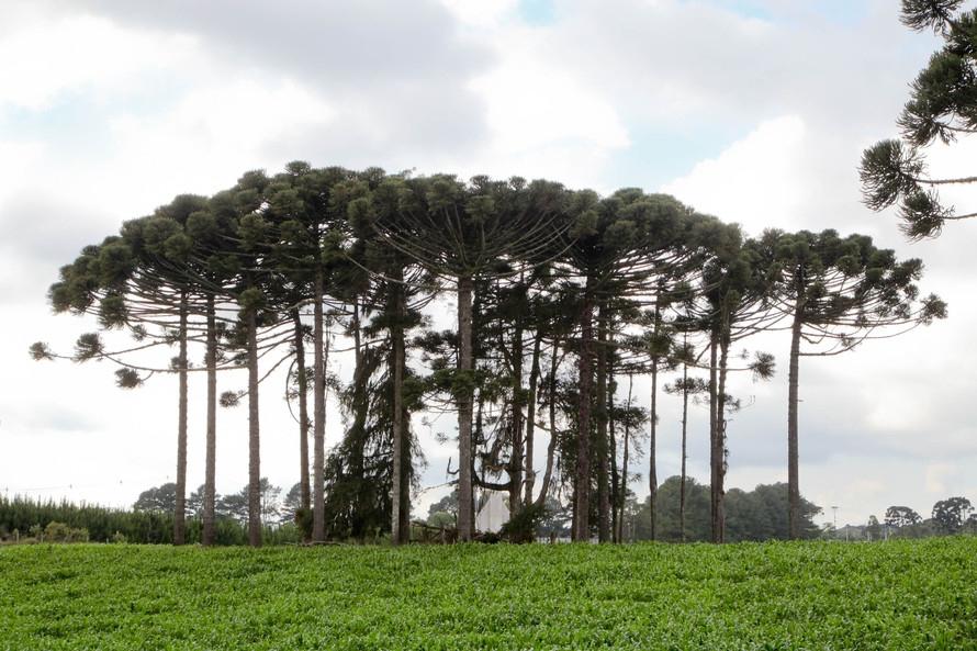 Milton Vieira vota sim ao projeto que prevê pagamento a agricultores por serviços ambientais 6